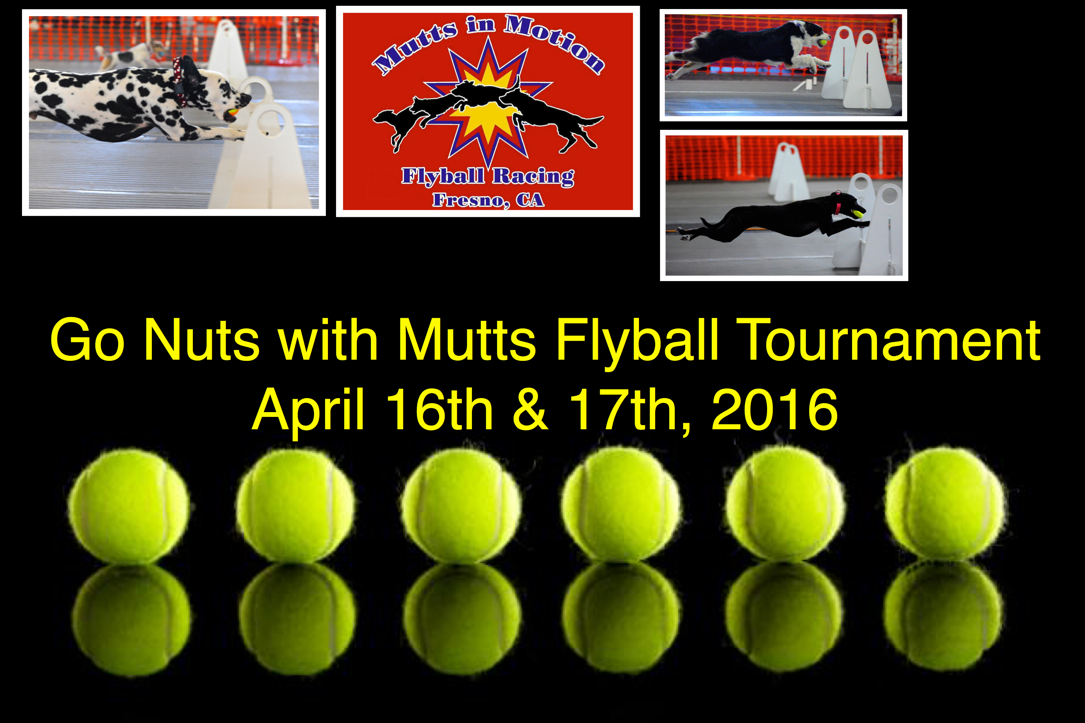 Go Nuts with Mutts 2016
