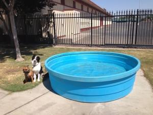 duke pool