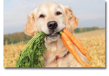 pegetables-img